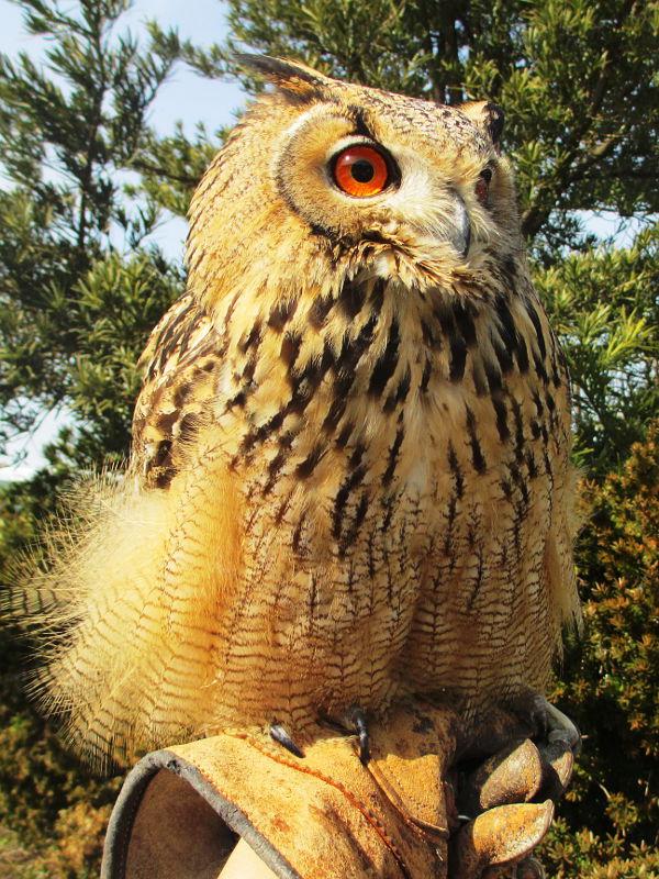 楽鳥園について イメージ