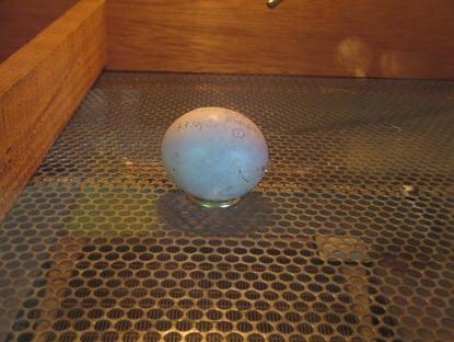 産卵、ハシウチ・・・イメージ