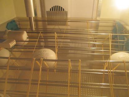 卵の状況です。イメージ