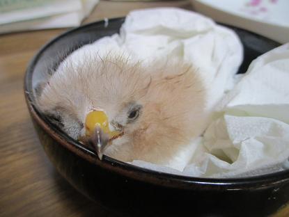 孵化!イメージ