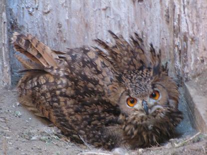 抱卵中の親鳥達イメージ
