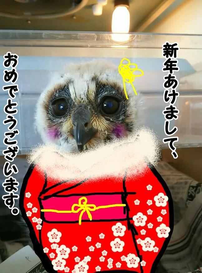新年あけまして、おめでとうございます!イメージ