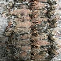 冷凍未処理ウズラ40羽 簡易包装箱詰めイメージ