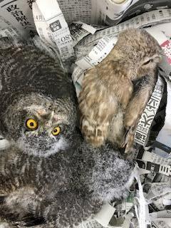 3羽のアヒル寝事情。イメージ
