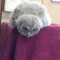 しあわせをよぶふくろうの城横浜店 スタッフ募集!!イメージ