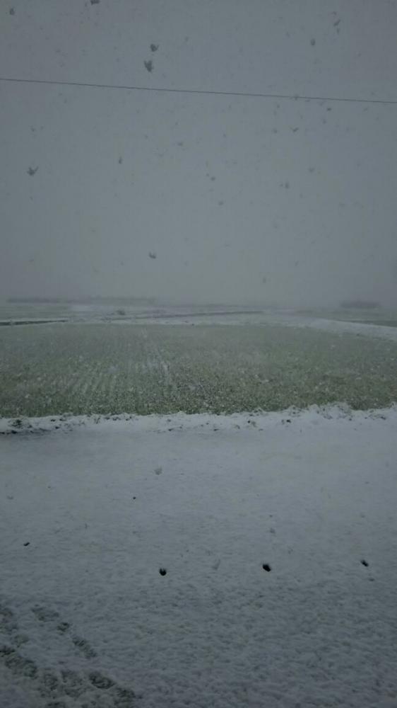雪だぁぁぁぁぁぁぁぁぁぁぁぁあ!!イメージ
